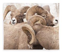 Three Bighorn Rams Fleece Blanket