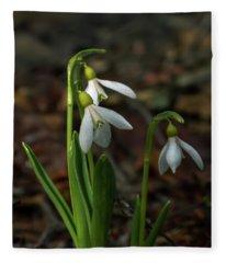 Three Snowdrop Flowers Fleece Blanket