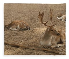 Three Deer Resting Fleece Blanket