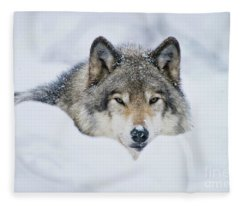 Timber Wolf Picture - Tw281 Fleece Blanket