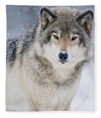 Timber Wolf Picture - Tw282 Fleece Blanket