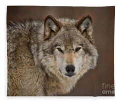 Timber Wolf Picture - Tw283 Fleece Blanket