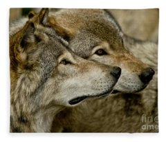 Timber Wolf Picture - Tw284 Fleece Blanket