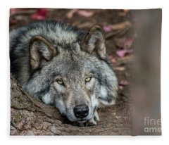Timber Wolf Picture - Tw286 Fleece Blanket