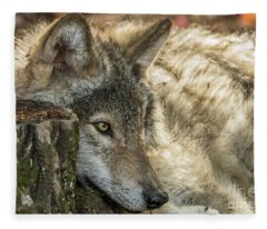 Timber Wolf Picture - Tw287 Fleece Blanket
