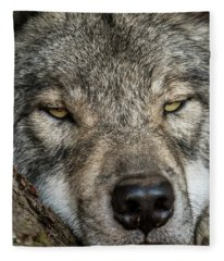 Timber Wolf Picture - Tw288 Fleece Blanket