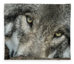 Timber Wolf Picture - Tw289 Fleece Blanket
