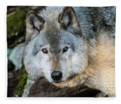 Timber Wolf Picture - Tw291 Fleece Blanket