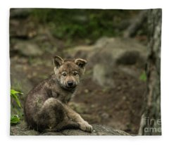 Timber Wolf Picture - Tw335 Fleece Blanket