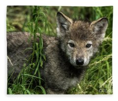 Timber Wolf Picture - Tw336 Fleece Blanket