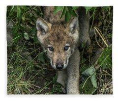 Timber Wolf Picture - Tw337 Fleece Blanket