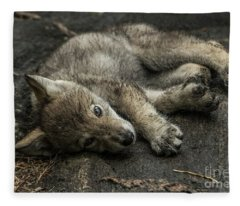 Timber Wolf Picture - Tw338 Fleece Blanket