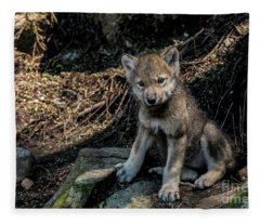 Timber Wolf Picture - Tw339 Fleece Blanket