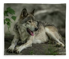 Timber Wolf Picture - Tw414 Fleece Blanket
