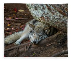 Timber Wolf Picture - Tw415 Fleece Blanket