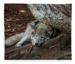 Timber Wolf Picture - Tw415 Fleece Blanket