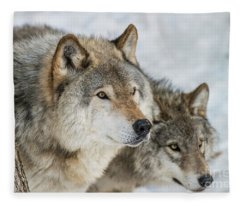 Timber Wolf Picture - Tw416 Fleece Blanket