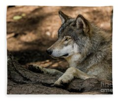 Timber Wolf Picture - Tw418 Fleece Blanket