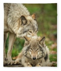 Timber Wolf Picture - Tw419 Fleece Blanket