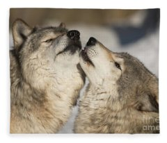 Timber Wolf Picture - Tw66 Fleece Blanket