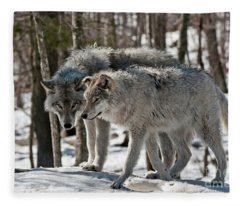Timber Wolf Picture - Tw67 Fleece Blanket