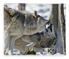 Timber Wolf Picture - Tw68 Fleece Blanket