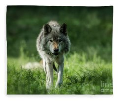 Timber Wolf Picture - Tw69 Fleece Blanket