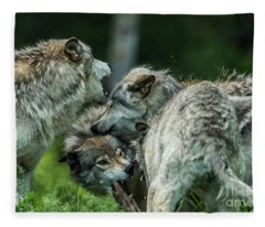 Timber Wolf Picture - Tw70 Fleece Blanket