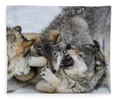 Timber Wolf Picture - Tw71 Fleece Blanket