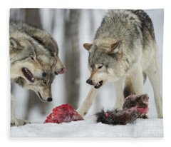 Timber Wolf Picture - Tw72 Fleece Blanket