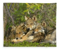Timber Wolf Trio In Denali Fleece Blanket