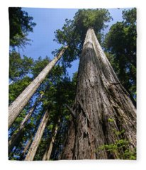 Towering Redwoods Fleece Blanket