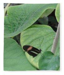 Butterfly Trying To Hide Fleece Blanket