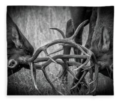 Two Bull Elk Sparring Fleece Blanket