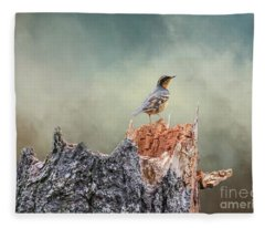 Varied Thrush On A Dead Tree Fleece Blanket