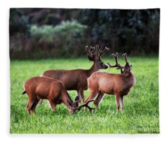 Velvet Antlers In The Sunset Fleece Blanket