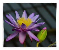 Violet And Yellow Water Lily Flower With Unopened Bud Fleece Blanket