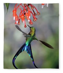 Violet-tailed Sylph Feeding Fleece Blanket