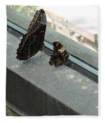 Brown Black Butterflies Watching Wondering Fleece Blanket