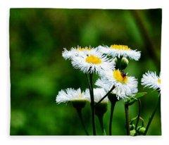 Bellis Daisy Fleece Blanket