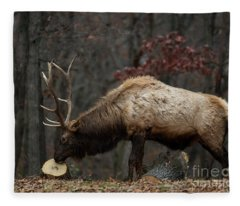 What's This? Fleece Blanket