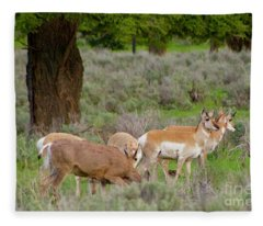 Where A Deer And The Antelope Graze Fleece Blanket