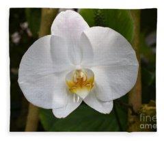 Phalaenopsis Sanderiana Fleece Blanket