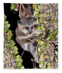 White-footed Sportive Lemur Fleece Blanket