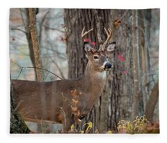 Whitetail #60 Fleece Blanket