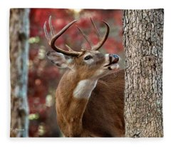 Whitetail #682 Fleece Blanket
