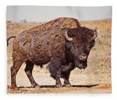 Wild Bison Fleece Blanket