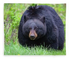 Wild Black Bear Fleece Blanket