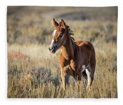 Wild Colt In Sand Wash Basin - Northwest Colorado Fleece Blanket
