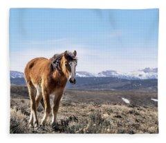 Wild Mustang Filly Of Sand Wash Basin Fleece Blanket